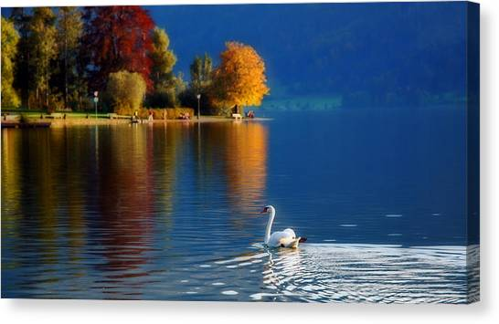 Beautiful Autumn Swan At Lake Schiliersee Germany  Canvas Print