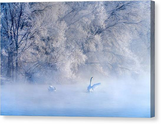 Swan Canvas Print - Swan Lake by Hua Zhu
