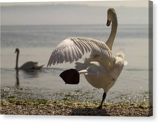 Swan Lake Canvas Print by Karim SAARI