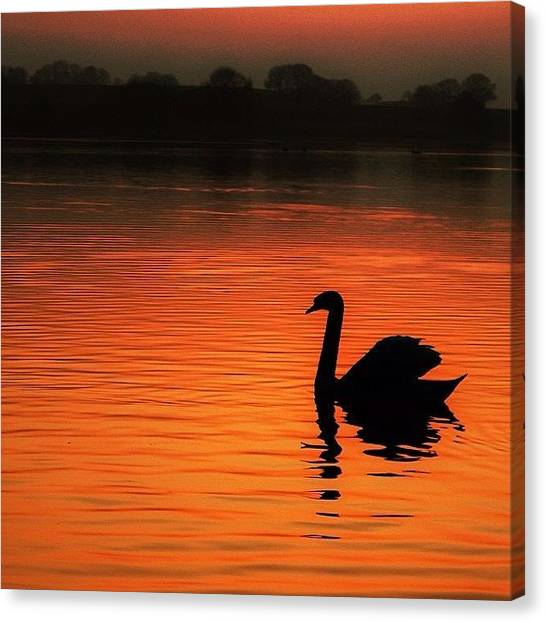 Lake Sunsets Canvas Print - Swan Lake by Phil Tomlinson