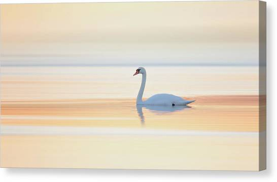 Swan Canvas Print - Swan by Leif L??ndal