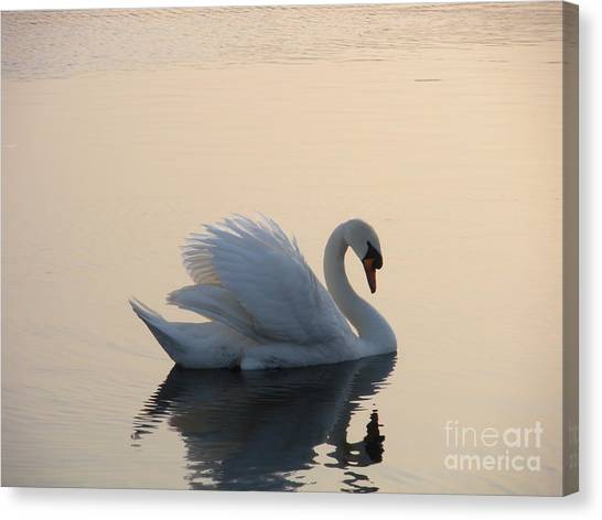 Swan On A Lake Canvas Print by Sophia Elisseeva
