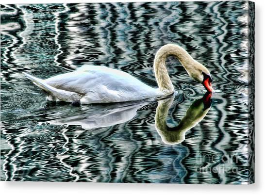 Swan On Lake Eola By Diana Sainz Canvas Print