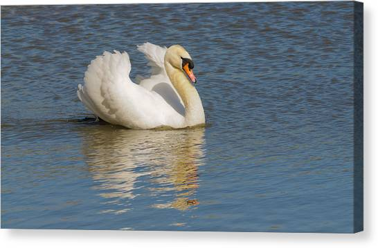 Large Birds Canvas Print - Swan Reflection by Jeffrey Banke