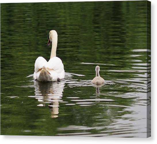 Canvas Print - Swan Song by Rona Black