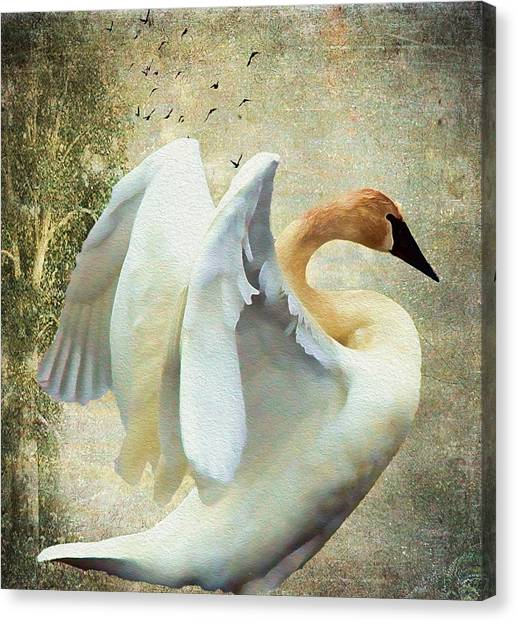 Swan - Summer Home Canvas Print