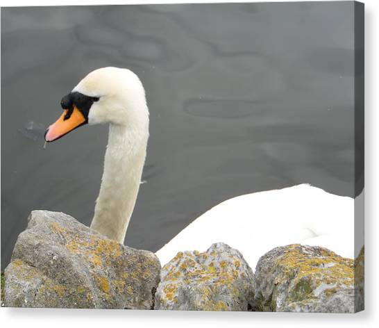 Swanness Canvas Print