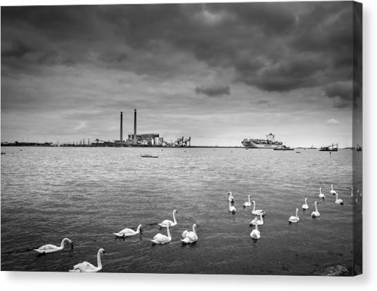 Swans And Ships. Canvas Print by Gary Gillette