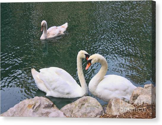 Swans In Love Canvas Print by Lidia Anderson