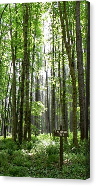 Swartwood Trail Canvas Print by Jennifer Compton