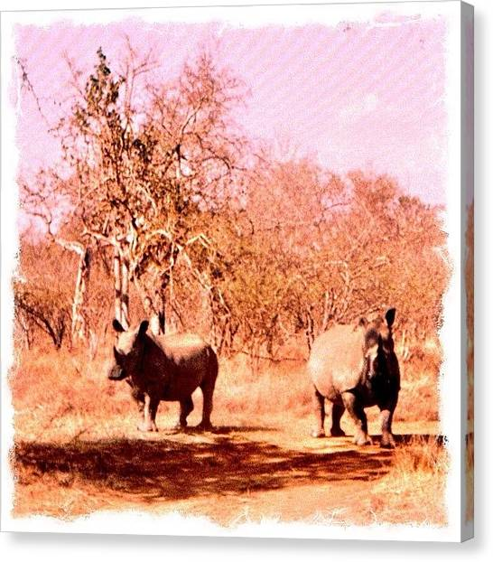 Rhinos Canvas Print - #swaziland #rhino Past Travels. © by Richard Randall
