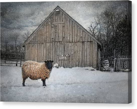Sheep Canvas Print - Sweater Weather by Robin-Lee Vieira