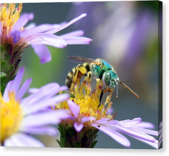 Sweet Bee Canvas Print