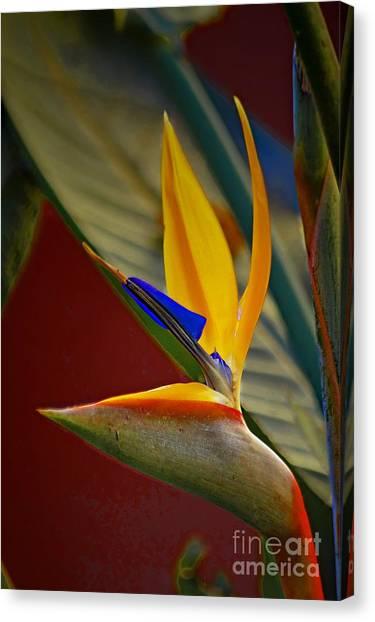 Sweet Bird In Veracruz Canvas Print