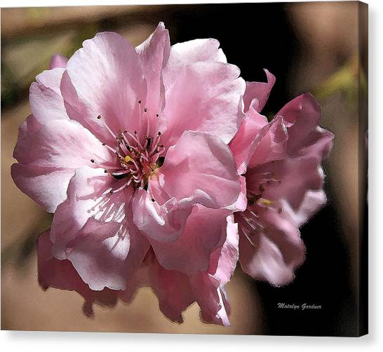 Sweet Blossoms Canvas Print