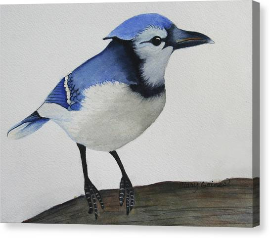 Sweet Blue Jay Canvas Print by Mary Gaines