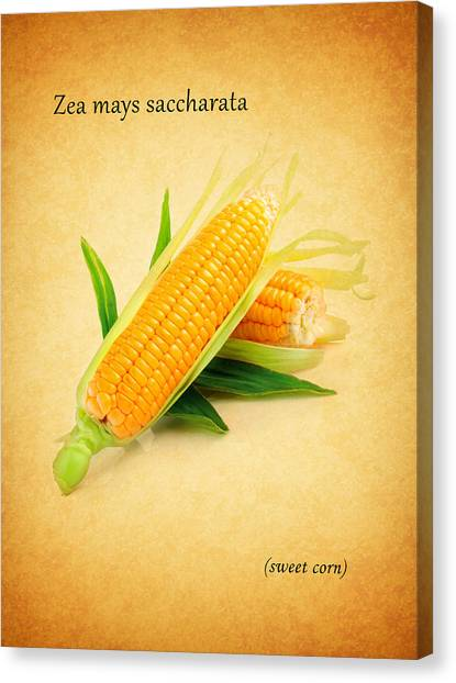 Scotch Canvas Print - Sweet Corn by Mark Rogan
