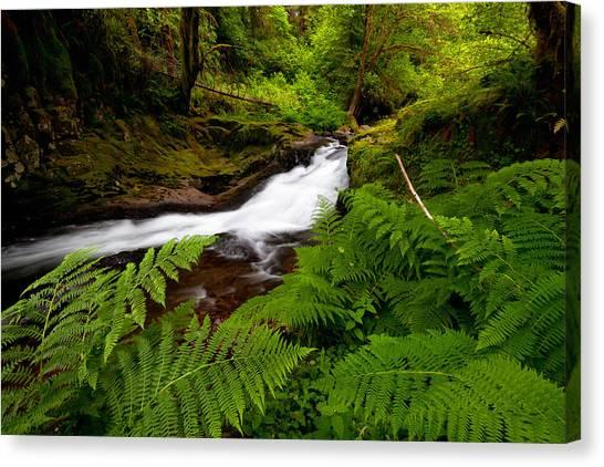 Sweet Creek Ferns Canvas Print