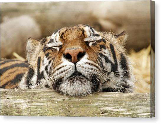 Canvas Print - Sweet Dreams by Steve McKinzie