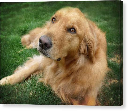 Puppies Canvas Print - Sweet Golden Retriever by Larry Marshall