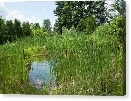 Oneida Canvas Print - Sweet Grass Gardens Nursery Carries by Angel Wynn