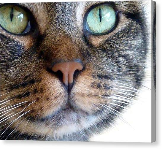 Sweet Green Eyes Canvas Print