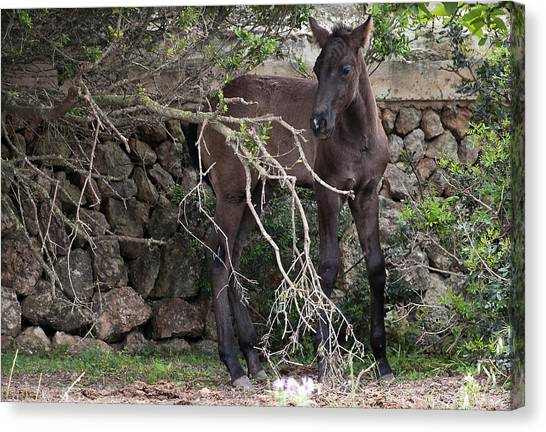 sweet heart - A tender foal wait his beloved mother  Canvas Print