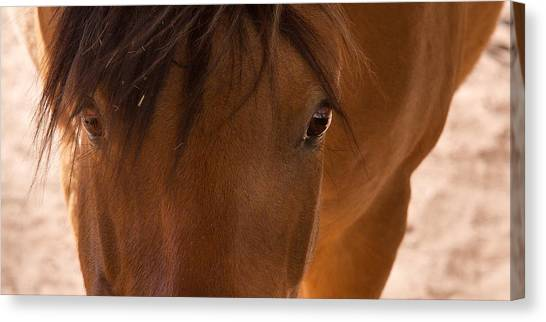Sweet Horse Face Canvas Print