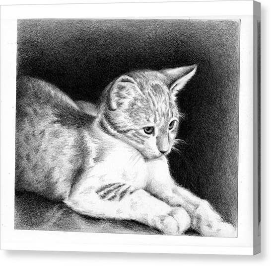 Sweet Kitty Canvas Print