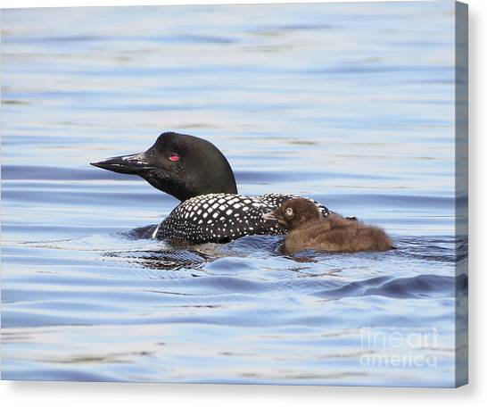 Sweet Loons Canvas Print