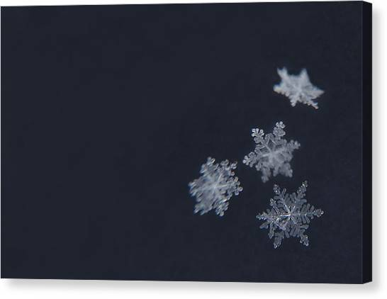 Snowflakes Canvas Print - Sweet Snowflakes by Carrie Ann Grippo-Pike