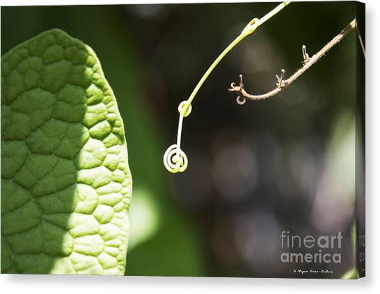 Sweet Tendril Canvas Print