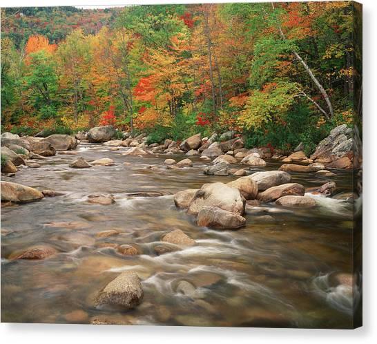 Swift River In Autumn, White Mountains Canvas Print