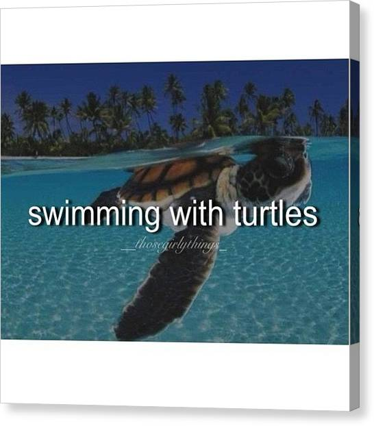 Turtles Canvas Print - Swimming With Turtle • Wanna Do This by Courtney Whetton
