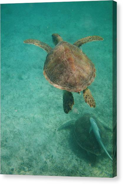 Swimming With Turtles Canvas Print