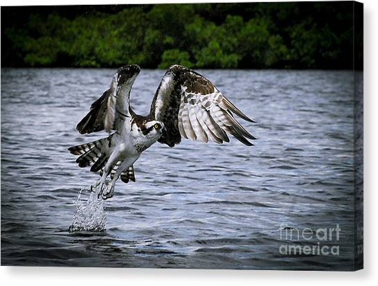 Osprey Canvas Print - Swing And A Miss by Quinn Sedam