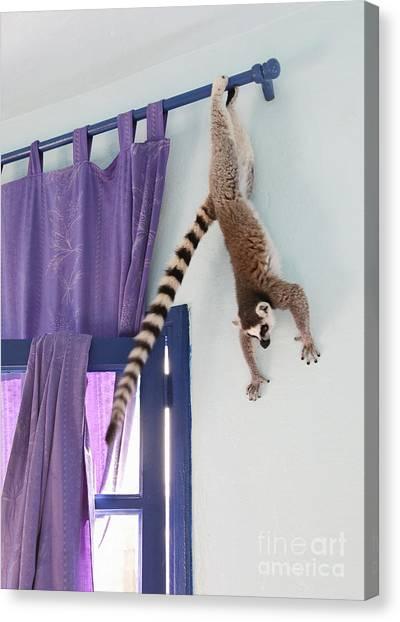 Animal Canvas Print - Swinging Lemur by Liz Leyden