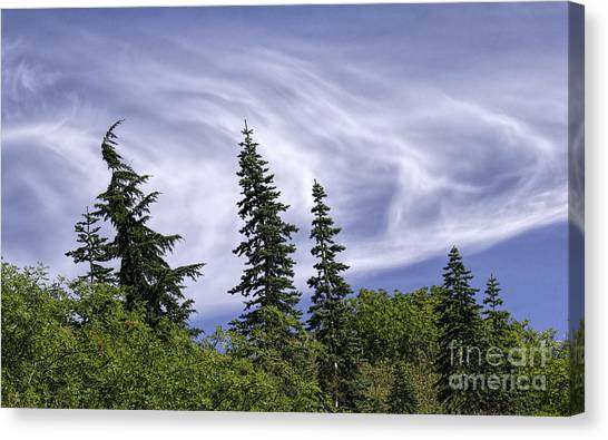 Swirling Clouds Crooked Trees Canvas Print