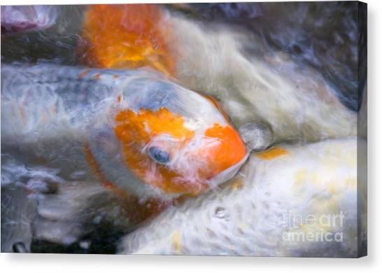 Swirling Koi Carp Canvas Print