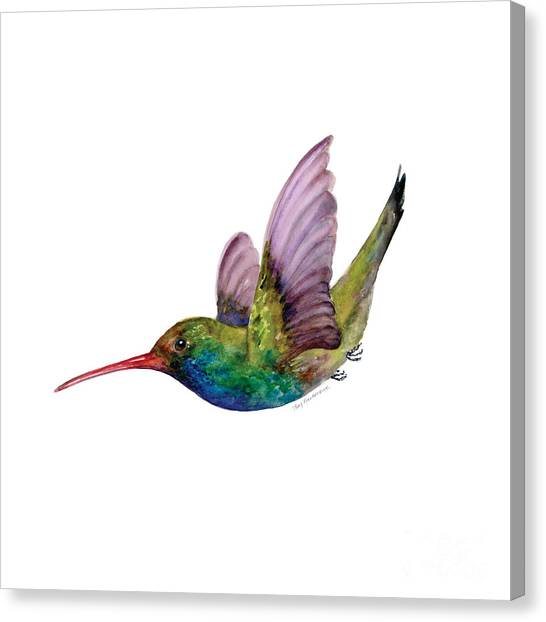 Swooping Broad Billed Hummingbird Canvas Print