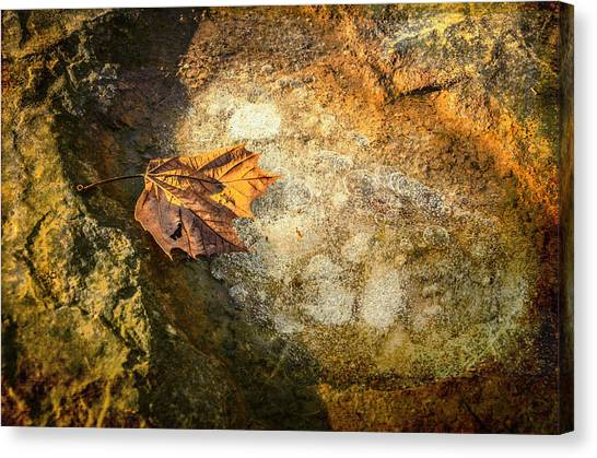 Sycamore Leaf In Ice Canvas Print