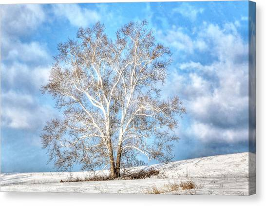 Sycamore Winter Canvas Print
