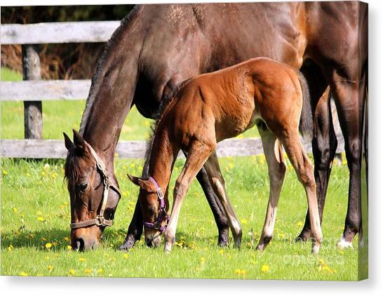 Sychronized Mare And Foal Canvas Print