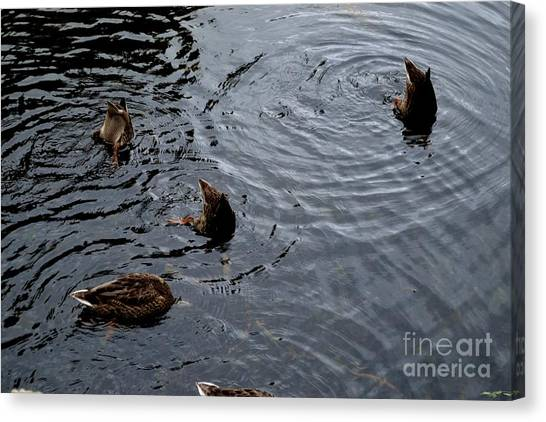 Canvas Print featuring the photograph Synchronised Swimming Team by Scott Lyons