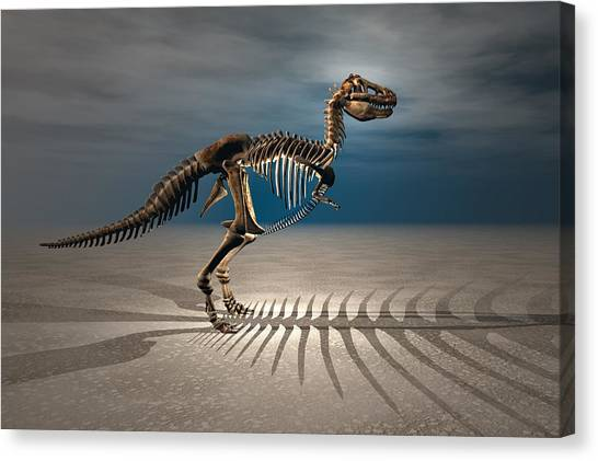 T. Rex Dinosaur Skeleton Canvas Print by Carol and Mike Werner