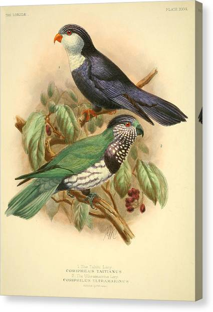 Parakeets Canvas Print - Tahiti Lory by Dreyer Wildlife Print Collections