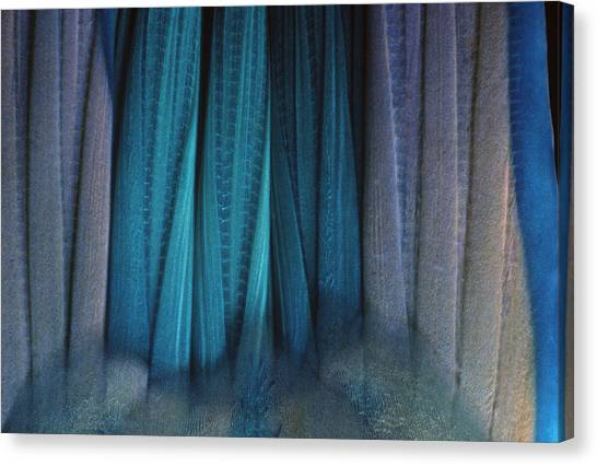 Parrot Fish Canvas Print - Tail Of Rainbow Parrotfish by Jeff Rotman