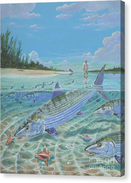 Conch Shells Canvas Print - Tailing Bonefish In003 by Carey Chen