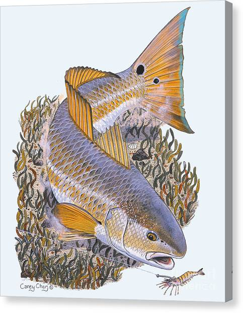 Drums Canvas Print - Tailing Redfish by Carey Chen