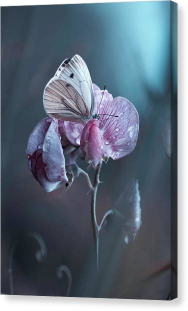 Bug Canvas Print - Tainted Love by Fabien Bravin